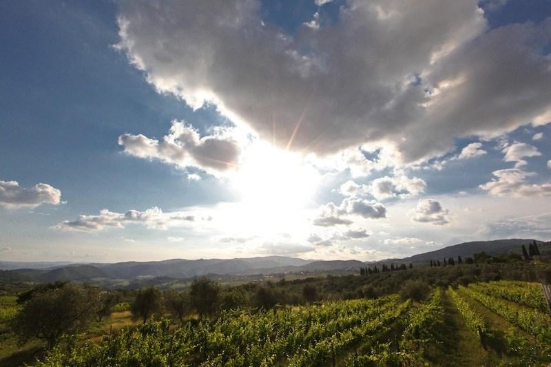 Fattoria Lavacchio filari di Chardonnay tra cielo e sole