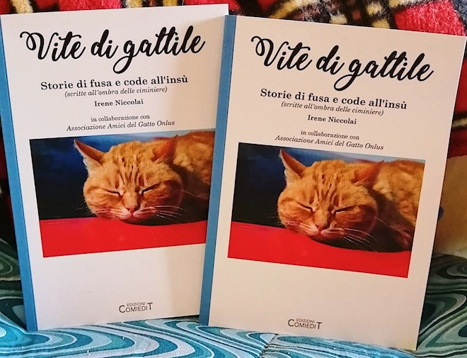 Vite di gattile